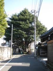 Himaraya1000