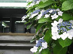 Syohei1