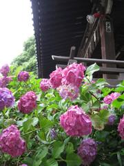 Shinagawa05