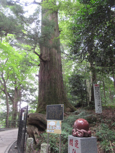 Takao010